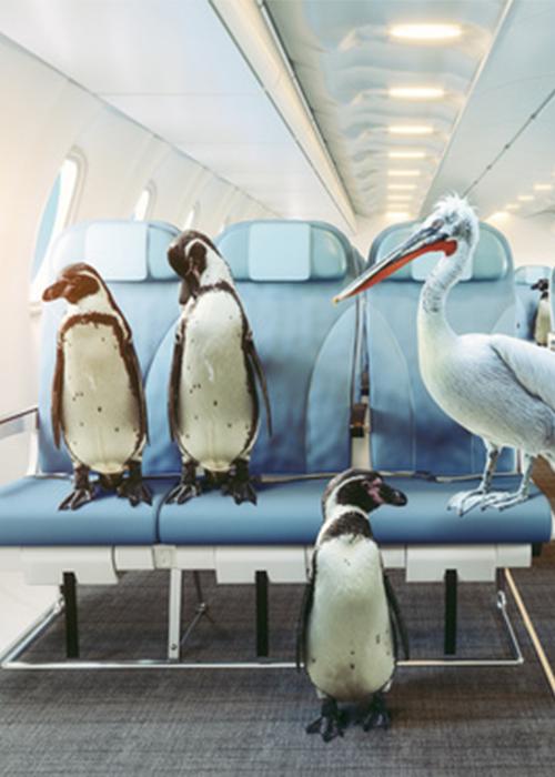 Animal Transport